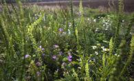 Wild flowers on Guys farm