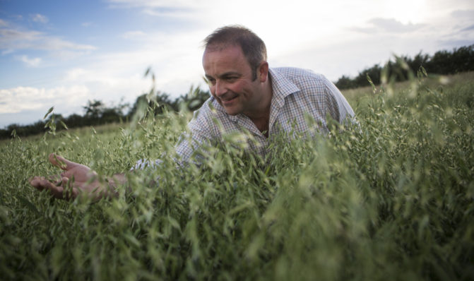 Stephen caring for oats